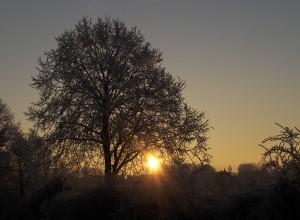 rising-sun-628742_960_720