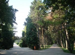 asemanatoarea cale a binelui si a  raului