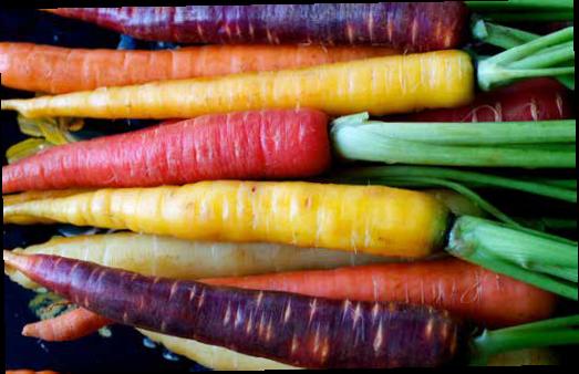 legume rădăcinoase: morcovul, pătrunjelul, țelina și sfecla roșie conțin o adevărată bogăție de vitamine și minerale